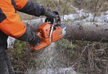 accidente forestal fallo aseguradora