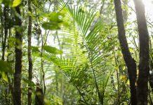 allianz iniciativa medioambiental corazon tierra