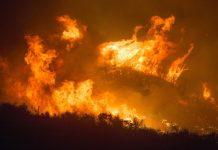 impacto seguro incendios california huracan laura