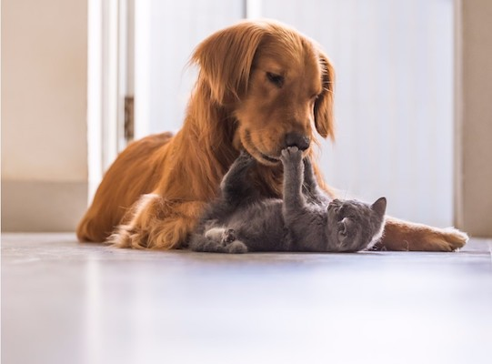 blister pack asistencia mascotas