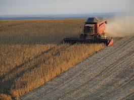 ventas seguros riesgos agropecuarios forestales