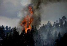 perdidas aseguradas munich re desastres naturales 2020