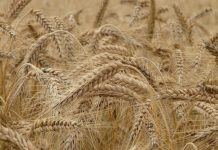 ventas seguros riesgos agropecuarios diciembre