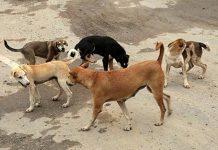 accidente in itinere art indemnización ataque perros